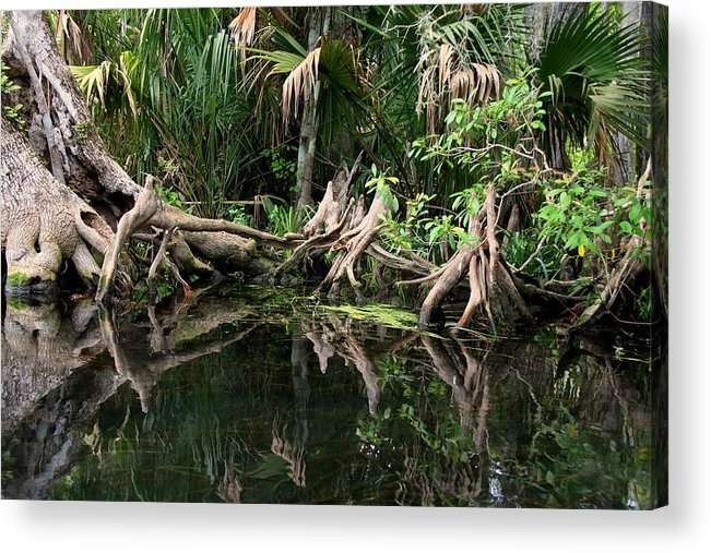 Cypress Tree Acrylic Print featuring the photograph Cypress Swamp by Barbara Bowen