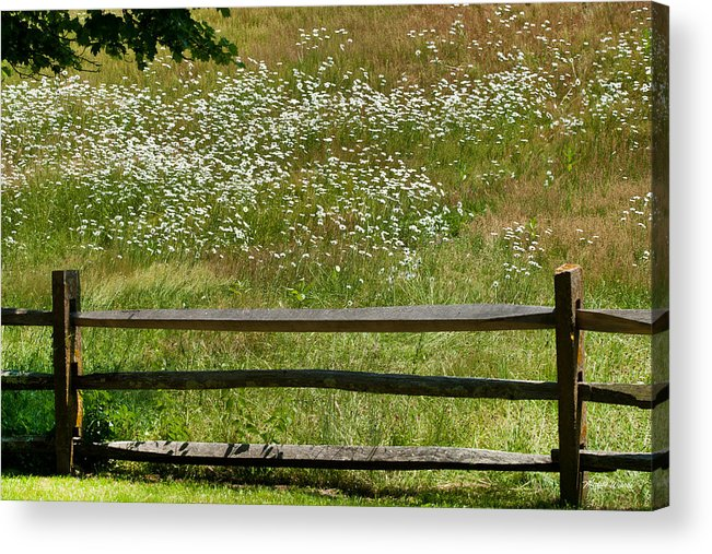 Flowers Acrylic Print featuring the photograph Daisies On The Vineyard by Michelle Constantine