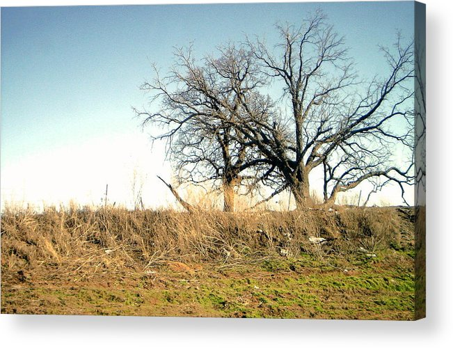 Acrylic Print featuring the photograph Dead Tree by Chad Taber