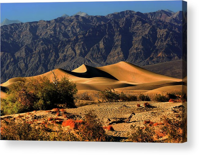Death Valley National Park Acrylic Print featuring the photograph Death Valley's Mesquite Flat Sand Dunes by Christine Till