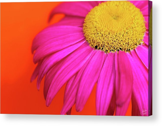 Colourful Acrylic Print featuring the photograph Delight by Lisa Knechtel