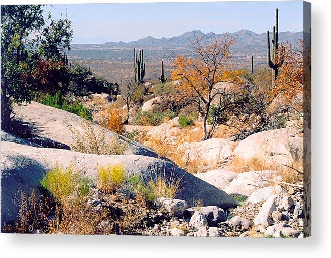 Desert Acrylic Print featuring the photograph Desert Autumn by Greg Taylor