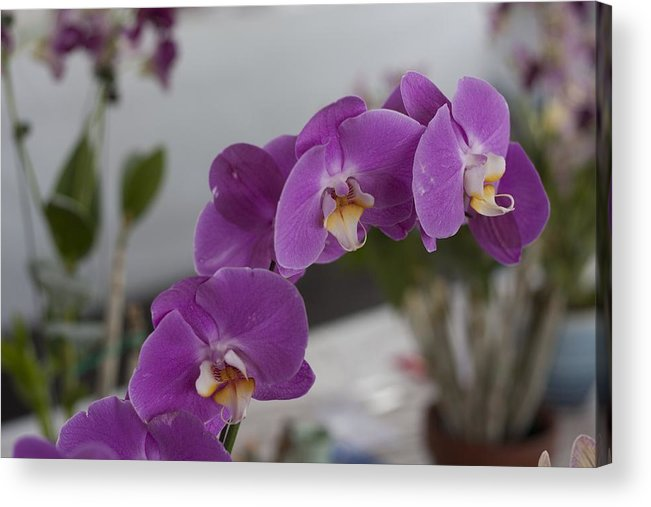Orchids Acrylic Print featuring the photograph Dessert Orchids by Kevin Sherf