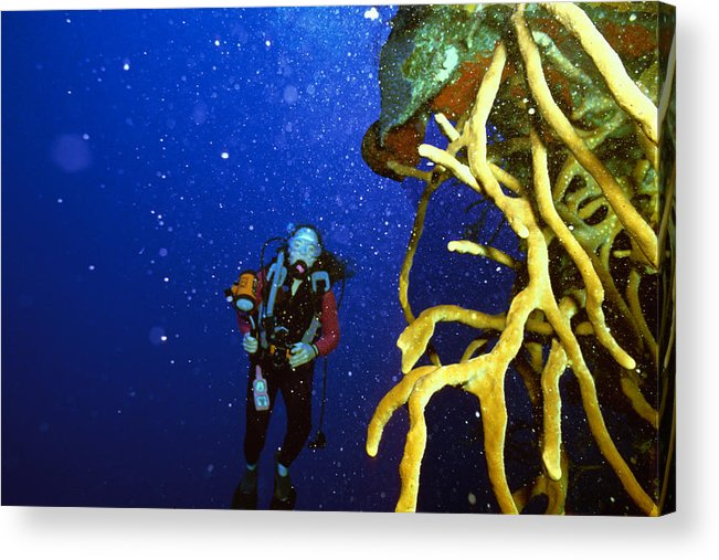 Dive Acrylic Print featuring the photograph Diving The Wall At Little Cayman by Carl Purcell