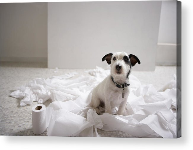 Horizontal Acrylic Print featuring the photograph Dog Sitting On Bathroom Floor Amongst Shredded Lavatory Paper by Chris Amaral