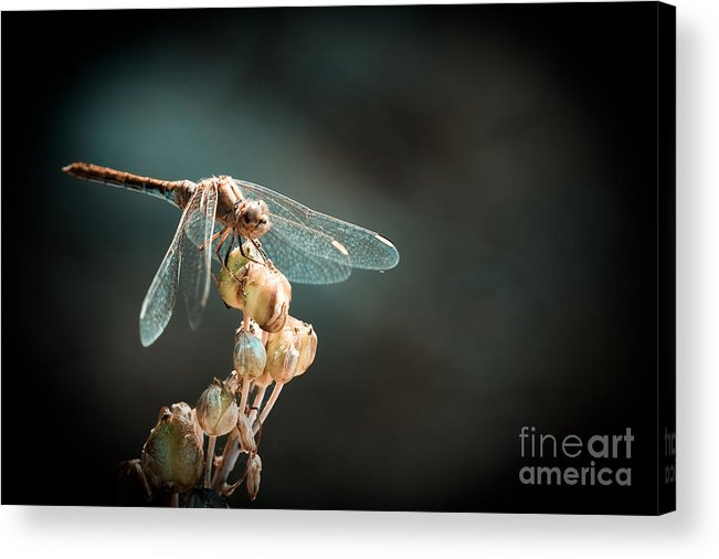 Dragonfly Acrylic Print featuring the photograph Dragonfly by Gabriela Insuratelu