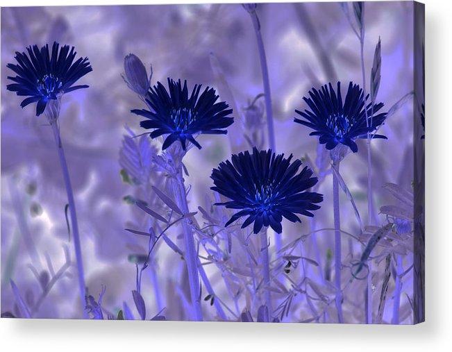 Nature Acrylic Print featuring the digital art Dream Fields by Tom Rickborn