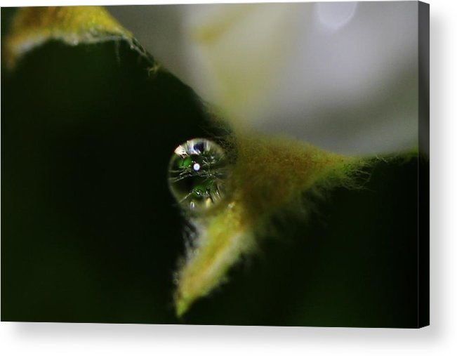 Water Drop Acrylic Print featuring the photograph Dropelet by Debbie Storie