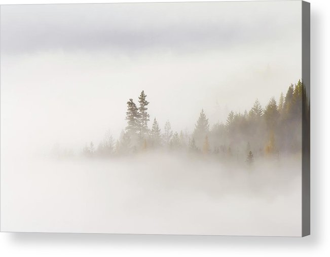 Fog Acrylic Print featuring the photograph Emergence by Mike Dawson