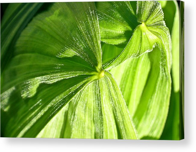 Plant Acrylic Print featuring the photograph Emerging Plants by Douglas Barnett
