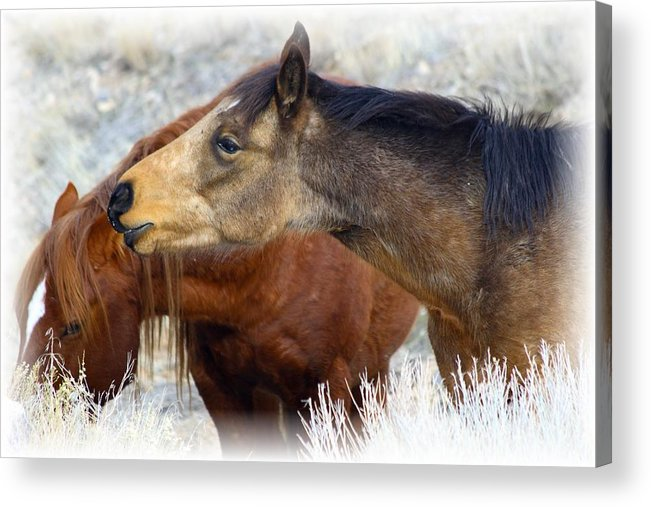 Wild Acrylic Print featuring the photograph Enchanting by Gene Praag