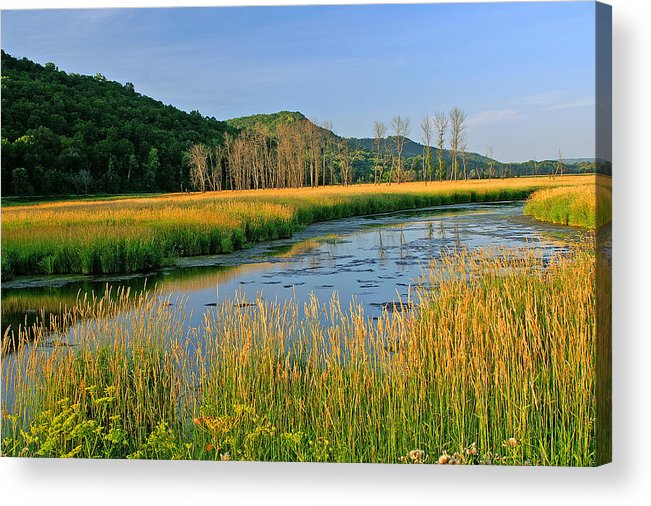 Wetlands Acrylic Print featuring the photograph Evening Gold by Bill Morgenstern