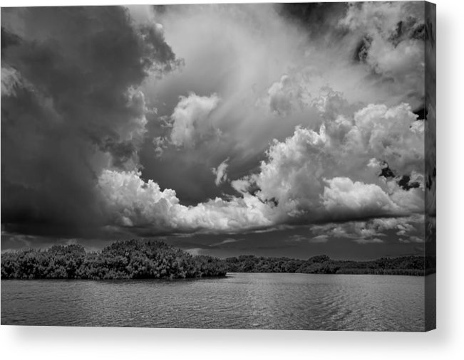 Everglades Acrylic Print featuring the photograph Everglades 0257bw by Rudy Umans