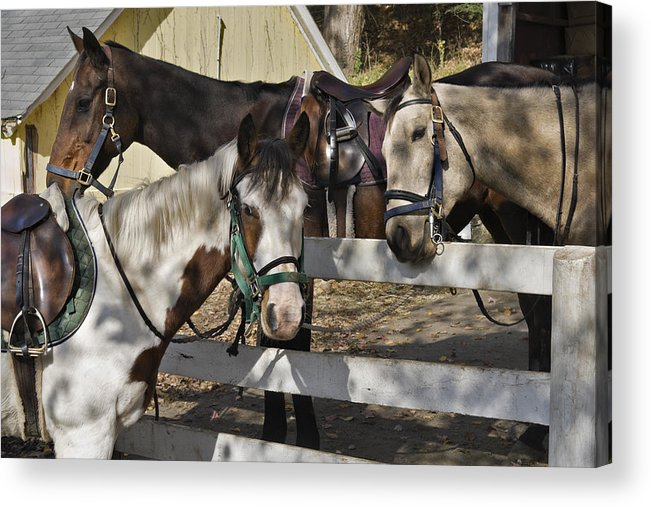 Horse Acrylic Print featuring the photograph Faces by Jack Goldberg