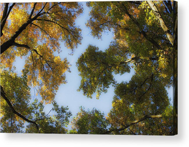 Fall Acrylic Print featuring the photograph Fall Canopy In Virginia by Teresa Mucha