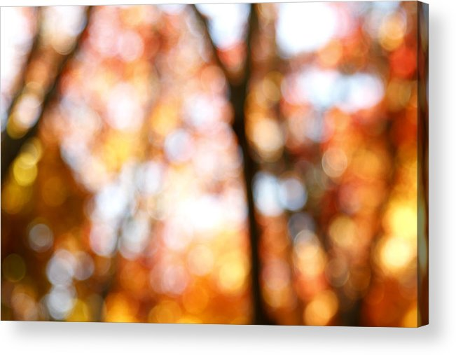 Abstract Acrylic Print featuring the photograph Fall Colors by Les Cunliffe