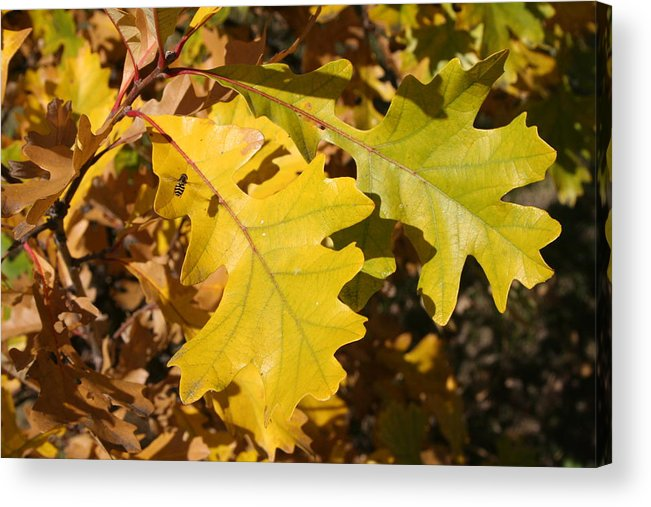 Photo Acrylic Print featuring the photograph Fall Colours by Lori DeBruijn