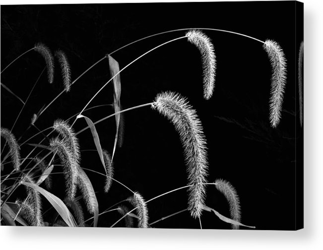Grass Acrylic Print featuring the photograph Fall Grass 3 by Mark Fuller