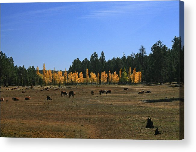 Landscape Acrylic Print featuring the photograph Fall In Line by Randy Oberg