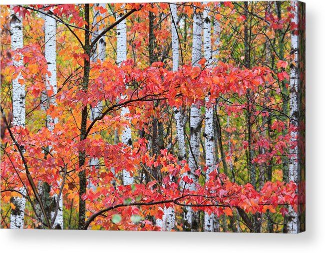Minnesota Acrylic Print featuring the photograph Fall Layers by Adam Pender