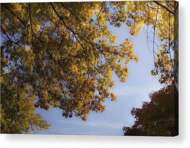 Fall Acrylic Print featuring the photograph Fall Magic by Teresa Mucha
