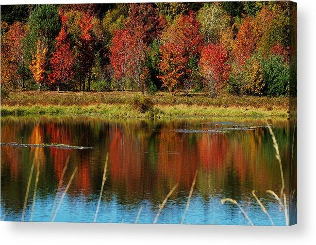 Autumn Acrylic Print featuring the photograph Fall Splendor by Linda Murphy