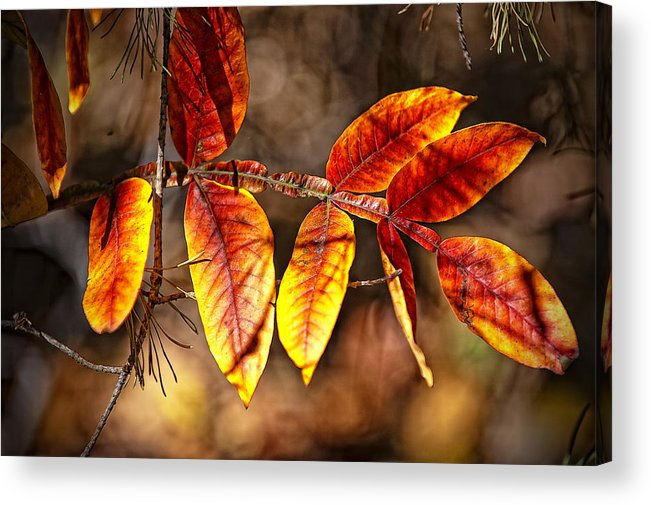 Landscape Acrylic Print featuring the photograph Fall Trees Number One by Michael Putnam