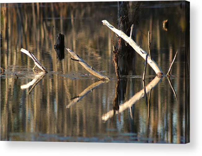 Abstract Acrylic Print featuring the photograph Fallen Trees by Lori Mellen-Pagliaro