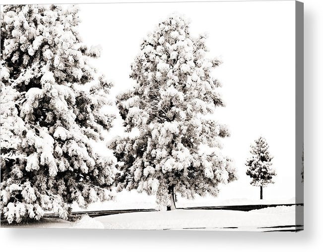 Trees Acrylic Print featuring the photograph Family Of Trees by Marilyn Hunt