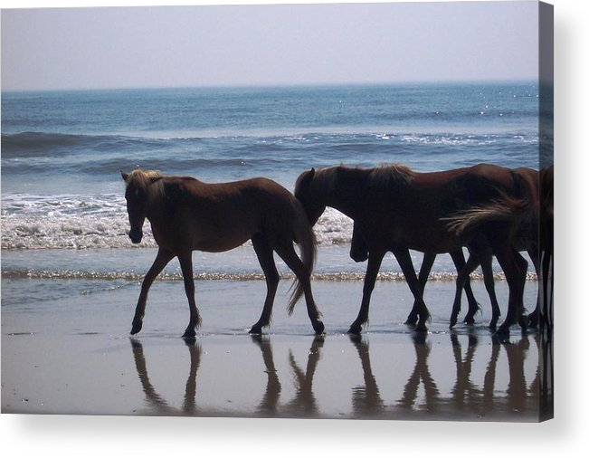 Horses Acrylic Print featuring the photograph Family Stroll by James and Vickie Rankin