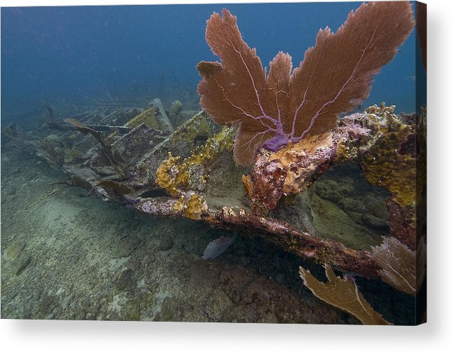 Coral; Atlantic Ocean; City Of Washington; Elbow Reef; Florida; Key Largo; Scuba Diving; Underwater Acrylic Print featuring the photograph Fan Coral On Elbow Reef In Key Largo by Bob Hahn