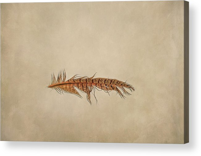 Scott Norris Photography Acrylic Print featuring the photograph Feather 2 by Scott Norris
