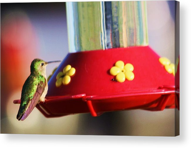 Hummingbirds Acrylic Print featuring the photograph Feeding Time by Russell Barton