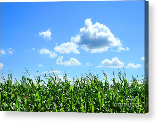 Agricultural Acrylic Print featuring the digital art Field Of Corn In August by Sandra Cunningham