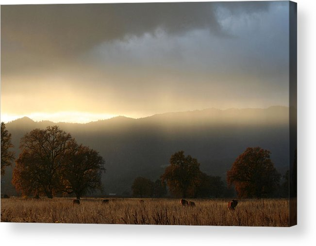 Country Acrylic Print featuring the photograph Fields Of Gold by Holly Ethan