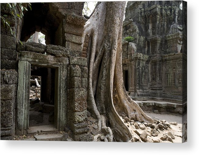 Day Acrylic Print featuring the photograph Fig Tree Growing Over Crumbling Ruins by Rebecca Hale