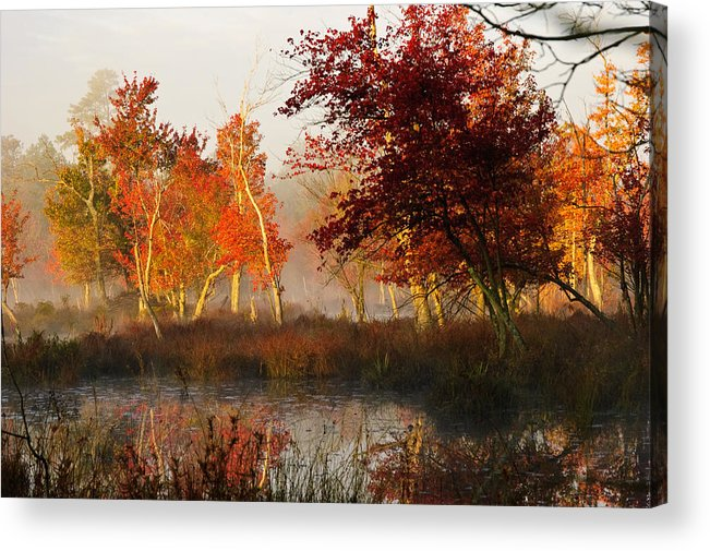Landscape Acrylic Print featuring the photograph First Light At The Pine Barrens by Louis Dallara