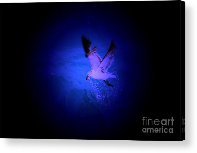 Birds Acrylic Print featuring the digital art Fish Groceries by Rana Adamchick
