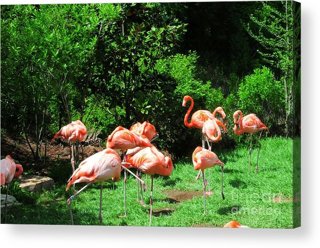 Flamingo Acrylic Print featuring the photograph Flamingo Party by Kathleen Struckle
