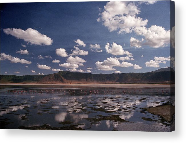 Ngorongoro Crater Acrylic Print featuring the photograph Flamingos by Marcus Best