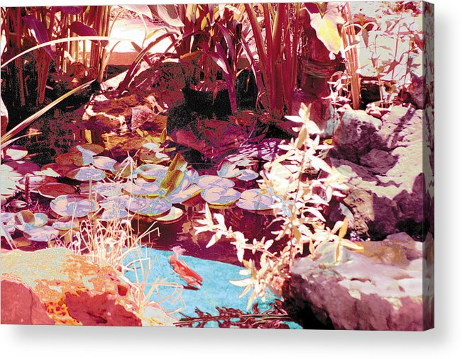 Koi Acrylic Print featuring the photograph Floating Lilies Pads Above The Koi. by Judy Loper