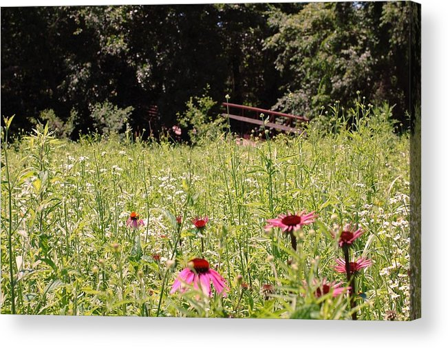 Flower Acrylic Print featuring the photograph Floral Bridge by Jame Hayes