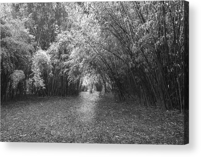 Garden Acrylic Print featuring the photograph Florida Garden Scene_011 by Pat Canova