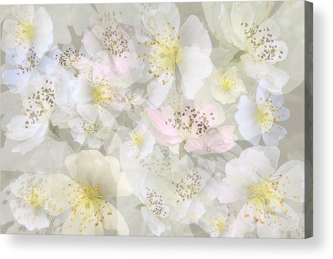 Rose Acrylic Print featuring the digital art Flower Girls Path by Gae Helton