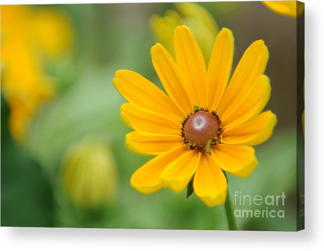 Yellow Acrylic Print featuring the photograph Flower by Miguel Celis