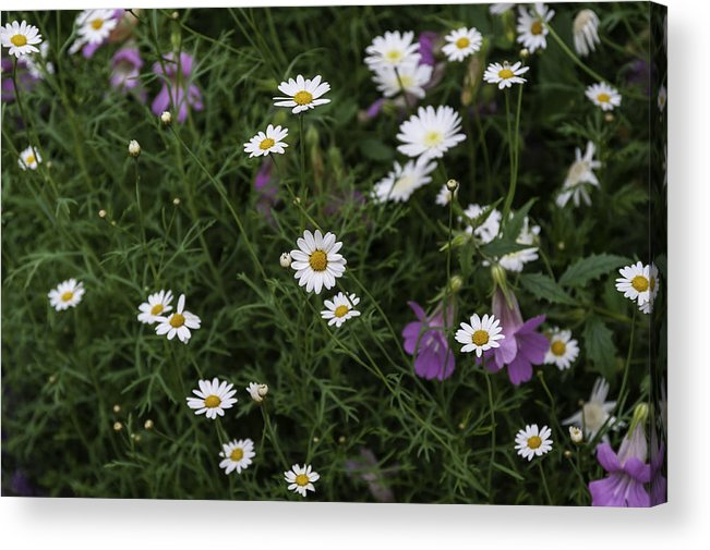 Flowers Acrylic Print featuring the painting Flowers 6 by Alexander Fuza