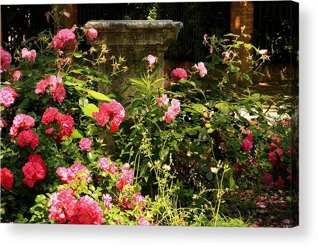 Venice Acrylic Print featuring the photograph Flowers In Garden In Venice by Michael Henderson