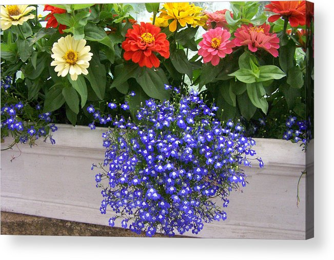 Flowers Acrylic Print featuring the photograph Flowers Of Blue by Chuck Shafer