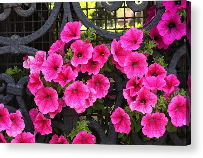 Flowers Acrylic Print featuring the photograph Flowers On Iron Grate In Venice by Michael Henderson