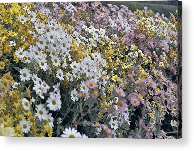 Flowers In Fall Acrylic Print featuring the photograph Flowers by Wes Shinn